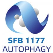 sfb_1177